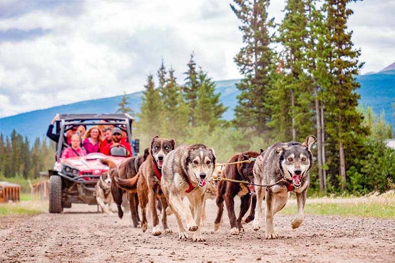 Yukon Dog Mushing Experience - Skagway Tour - Alaska Excursion